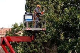 trimming trees from a bucket truck in Florissant, MO.